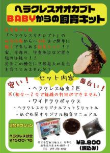 NPO法人恵夢会(めぐむかい・めぐむや)ヘラクレスオオカブトムシ販売飼育セット